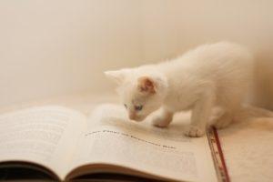 勉強する子猫